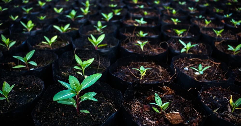 Qué plantar en septiembre - Blog Verdecora