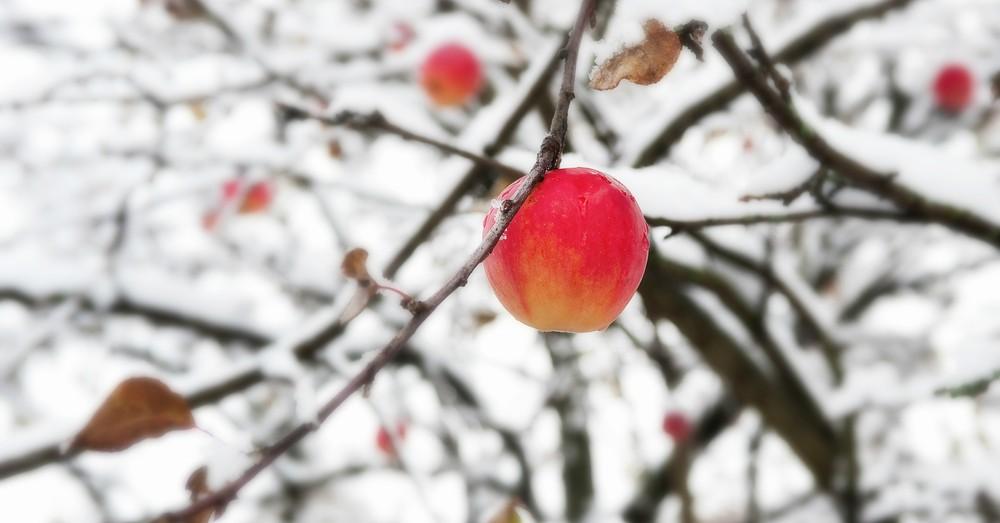C mo proteger el huerto en invierno blog verdecora for Preparar el huerto en invierno