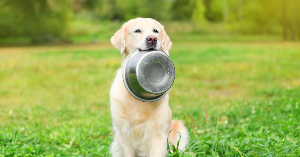 Pin alimentacion del perro imagenes on pinterest for Ahuyentar perros del jardin