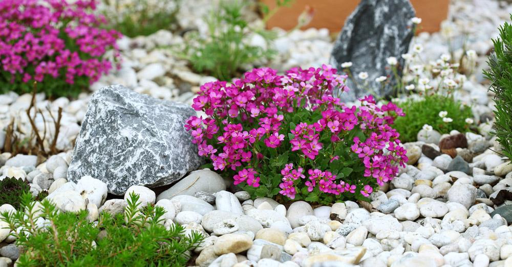 Renovar el jard n con piedras decorativas blog verdecora for Jardines decorados con piedras y plantas