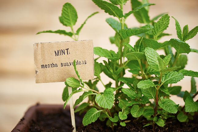 Plantas para el balcón: plantas aromáticas