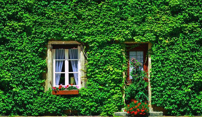 Plantas perfectas para el balcón: hiedra