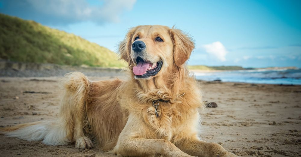 10 consejos para cuidar a tu perro en verano blog verdecora - Verdecora mascotas ...