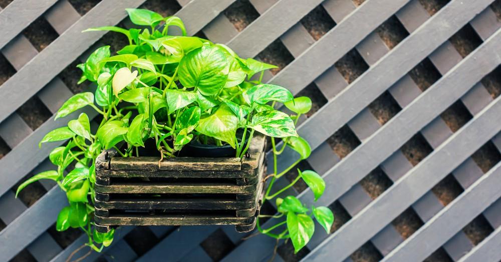 Cuatro plantas para purificar el aire de tu hogar blog Plantas limpiadoras de aire