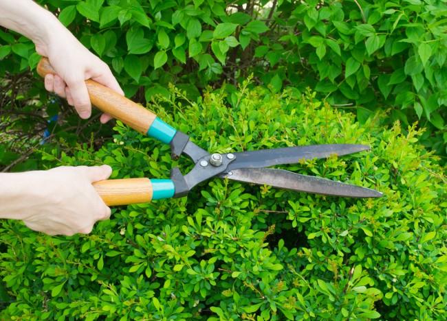 labores-jardin-septiembre-poda