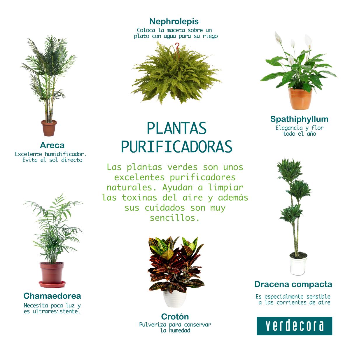 Plantas que limpian el aire beautiful plantas que - Plantas de interior purificadoras del aire del hogar ...