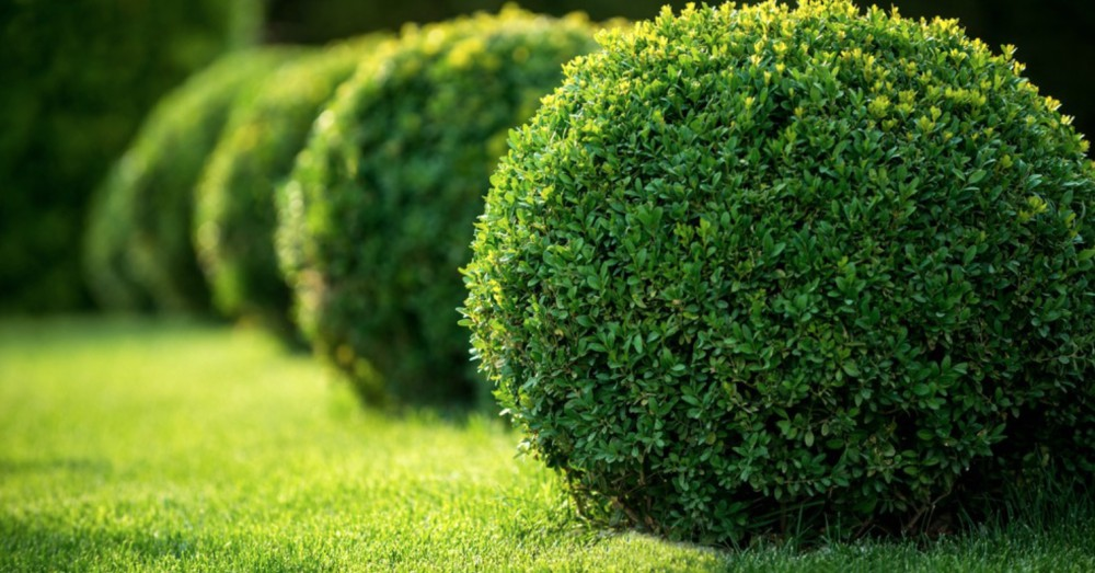 Elegir arbustos y con feras en oto o blog verdecora for Coniferas de jardin