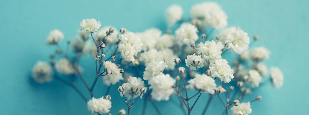Las mejores flores para Todos Los Santos