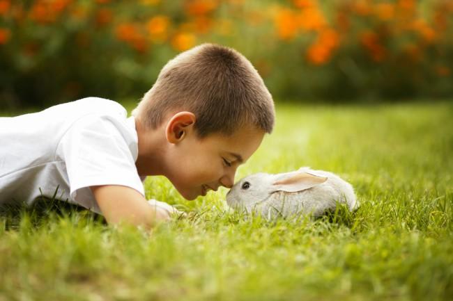 Roedores y conejos: cómo elegir a su mejor amigo - Blog Verdecora