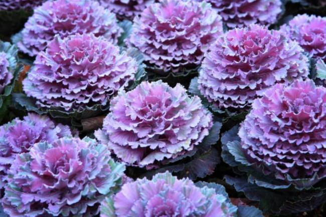 Cinco Plantas Para Tu Jardin De Otono Blog Verdecora - Plantas-para-jardin