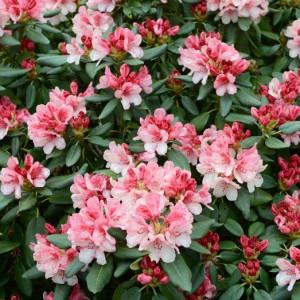 elegir plantas ornamentales consejos verdecora On cinco plantas ornamentales