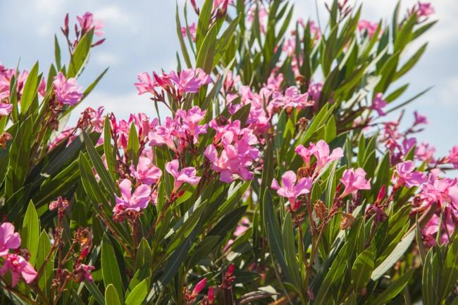 Cinco plantas perennes para el jard n en invierno blog verdecora - Plantas de jardin exterior ...
