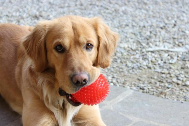 Los cuidados de las mascotas en Navidad