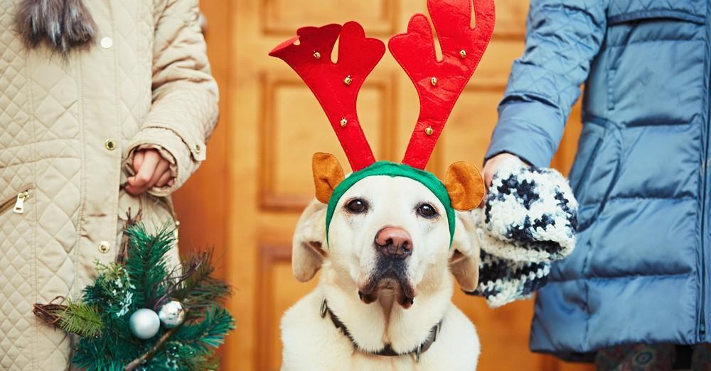 Cuidados para mascotas en Navidad