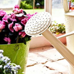C mo cuidar las plantas suculentas blog verdecora - Cuidados plantas interior ...