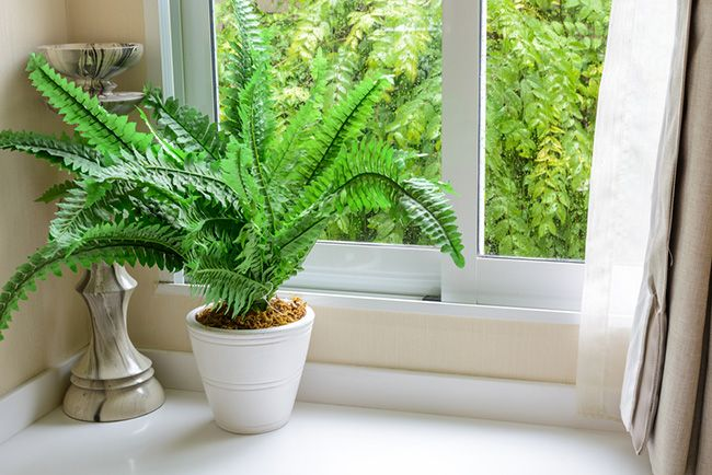 La luz, incluso la de invierno (más tenue), es necesaria para nuestras plantas de interior