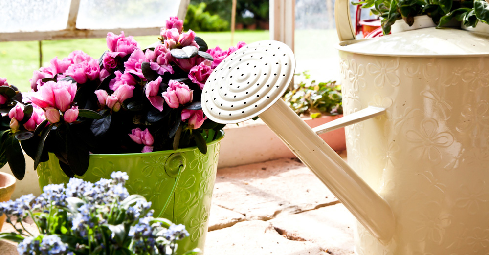 Cuidados de las plantas de interior blog verdecora - Plantas de interior online ...