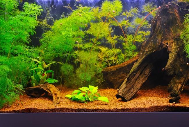 Elegir peces para un acuario de agua fr a blog verdecora for Enfermedades de peces de agua fria