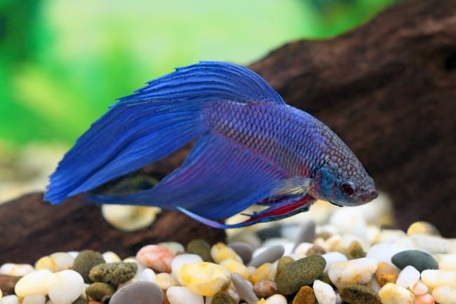 Elegir peces para un acuario de agua fr a blog verdecora for Alimentacion para peces de agua fria