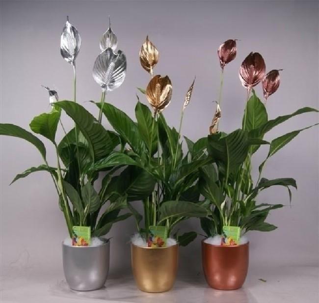 Ideas de regalo para amantes de las plantas blog verdecora - Plantas de interior online ...