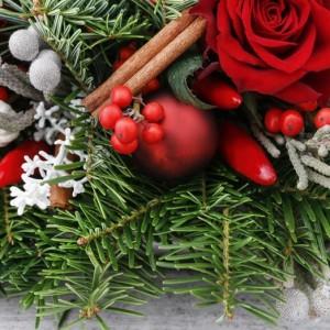 Cuidados de la planta de navidad latest cuidados de la - Cuidados planta navidad ...