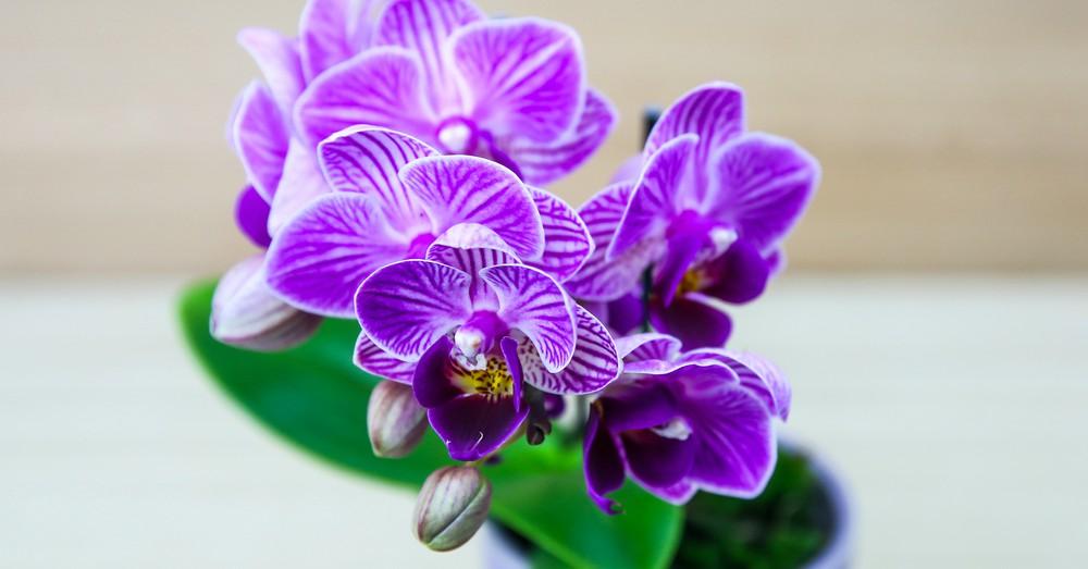Cuidados de las orqu deas en invierno blog verdecora for Cuidados orquideas interior