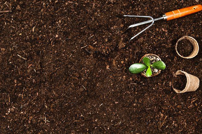 como-elegir-sustrato-adecuado-plantas
