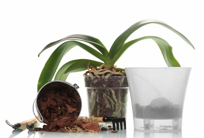 cuidados de las orqu deas en invierno blog verdecora. Black Bedroom Furniture Sets. Home Design Ideas