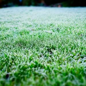 cinco plantas perennes para el jard n en invierno blog