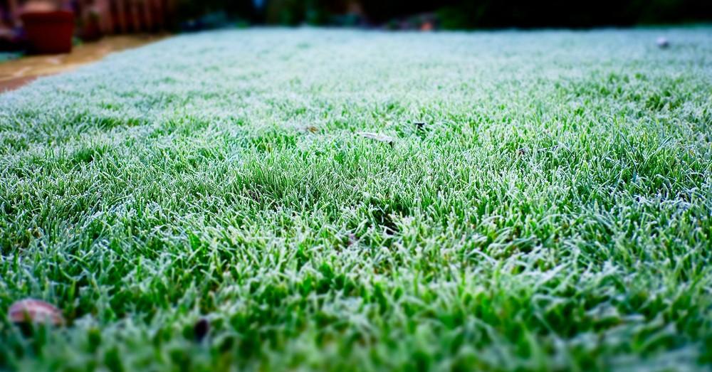 trucos para cuidar el c sped en invierno blog verdecora