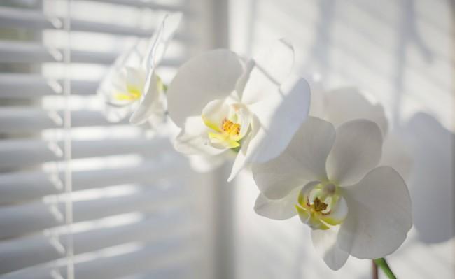 Cuidados De Las Orquideas En Invierno Blog Verdecora - Orquideas-blancas-cuidados