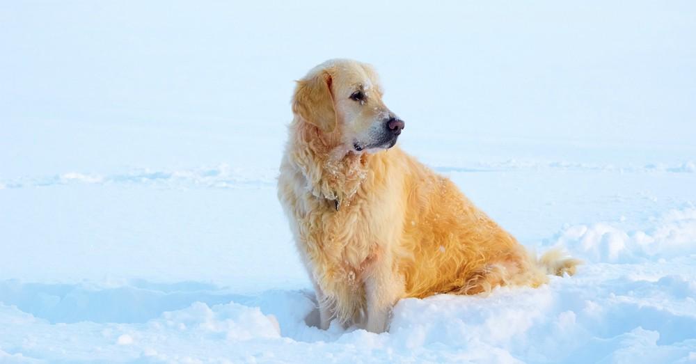 Cuidar el pelo de tu perro en invierno blog verdecora - Verdecora mascotas ...