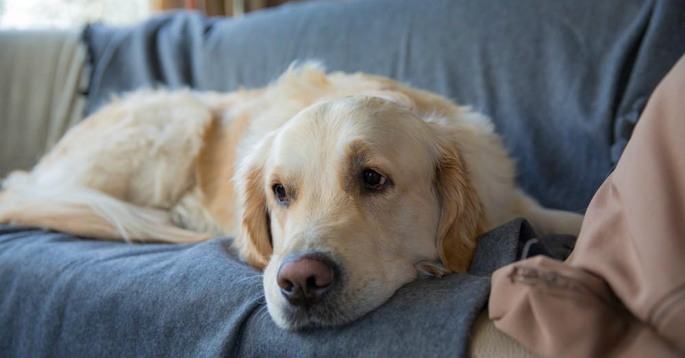Pasan fr o los perros blog verdecora - Verdecora mascotas ...