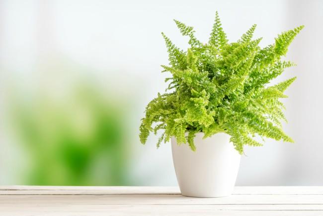 Cinco Plantas De Interior Resistentes Blog Verdecora - Plantas-de-interior-resistentes