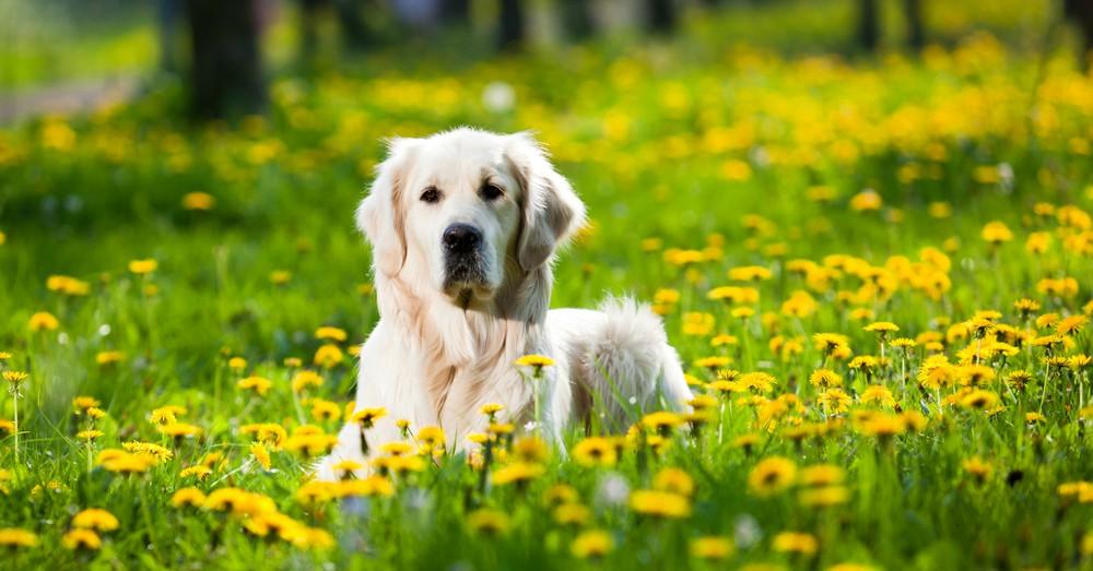 Antiparasitarios salud del perro en primavera blog for Ahuyentar perros del jardin