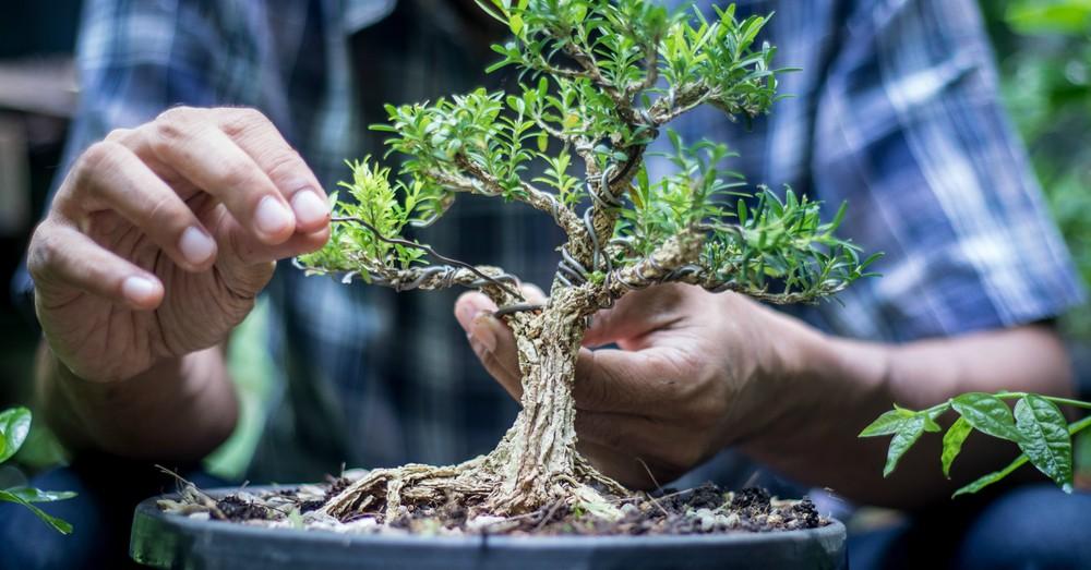 Motivos para regalar un bonsái el Día del Padre