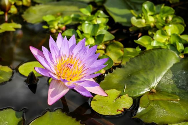 las plantas y flores de estanque son uno de los motivos para elegir su ubicacin