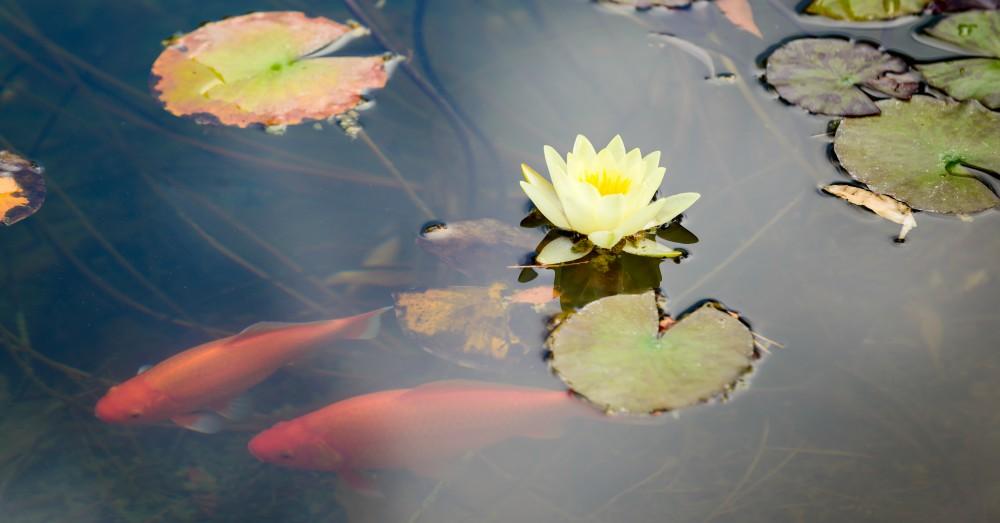 C mo hacer un estanque para el jard n blog verdecora for Estanques de jardin prefabricados