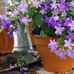 C mo cuidar las plantas suculentas blog verdecora - Como se cuida un bonsai ...