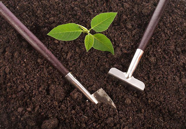 El tipo de sustrato que elijamos ha de ir acorde a las necesidades de las plantas. Visita aquí nuestra gama de sustratos
