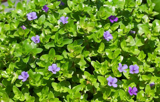 Visita esta planta aquí en nuestra tienda online