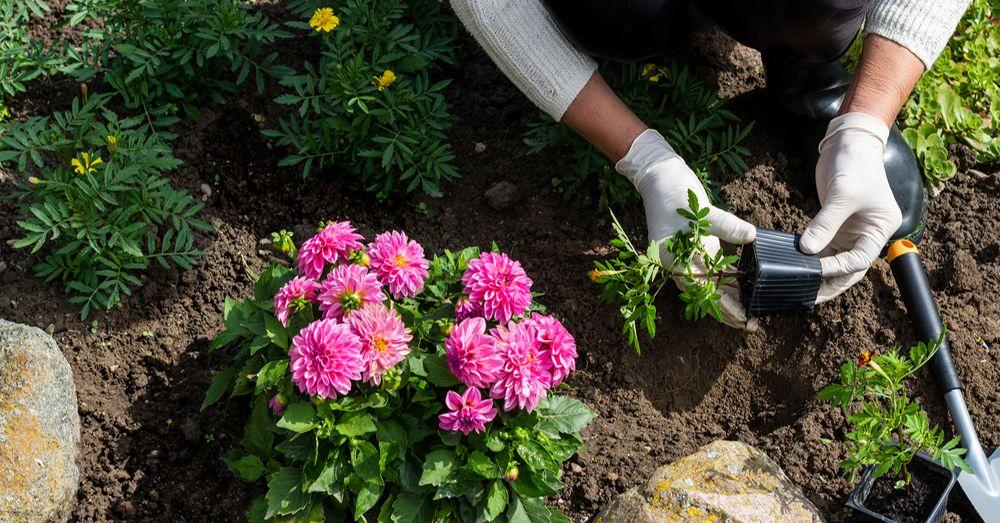 Cinco plantas con flor para la primavera