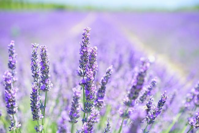 Consejos para cultivar aromáticas en casa
