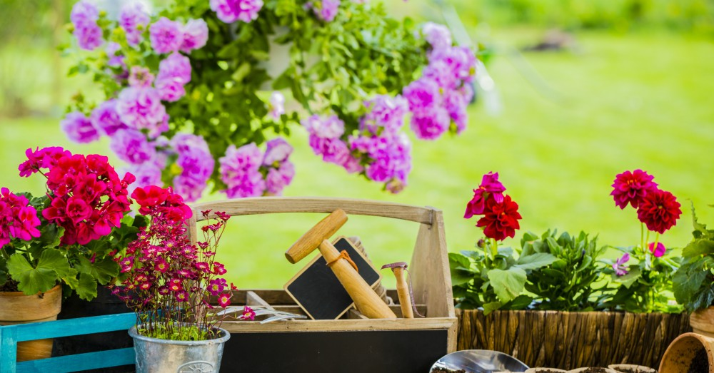 Cuatro plantas para el jard n en primavera blog verdecora for Plantas para jardin