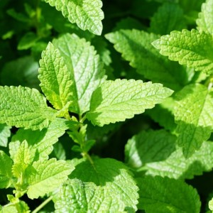 Tipos de plantas de interior con flor blog verdecora - Cultivar plantas aromaticas en casa ...