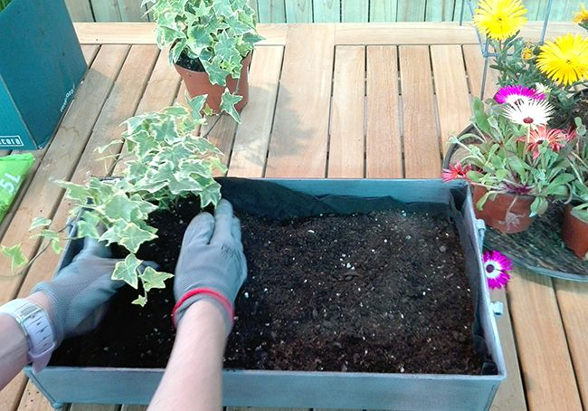 Diy Un Centro De Mesa Con Plantas Blog Verdecora - Centros-de-mesa-con-plantas-naturales