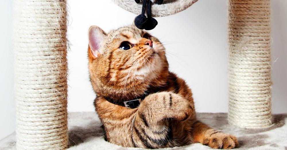 La importancia del rascador para gatos blog verdecora for Ahuyentar gatos del jardin