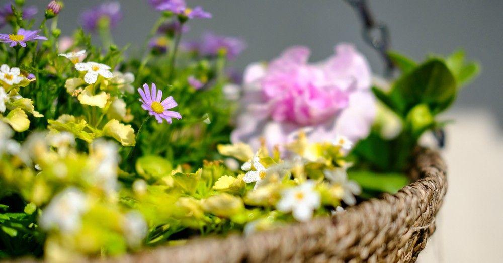 Las mejores plantas para tiestos colgantes blog verdecora for Jardin vertical verdecora