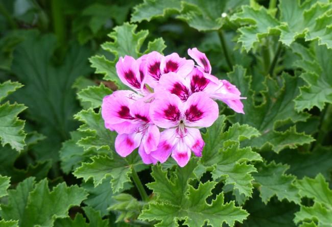 Las mejores plantas para tiestos colgantes blog verdecora - Plantas verdes exterior ...