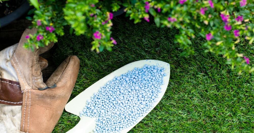 Elegir el abono adecuado para plantas